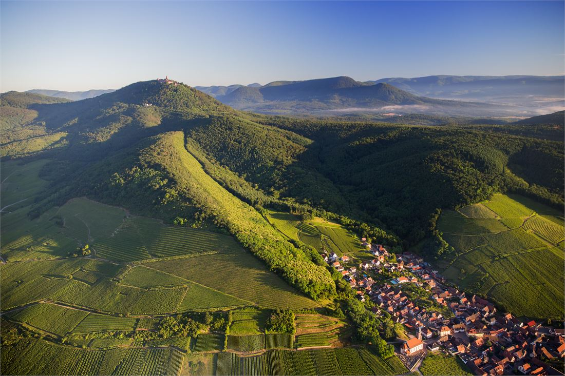 The Vosges Mountains protect the vineyards of Alsace