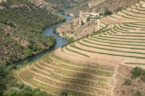Port weathers a very hot 2020 growing season in the Douro