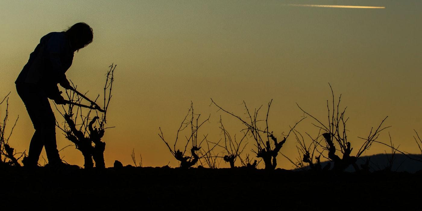 Rethinking Rioja