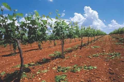 Spanish Variety - Spain's Most Exciting Wine Styles