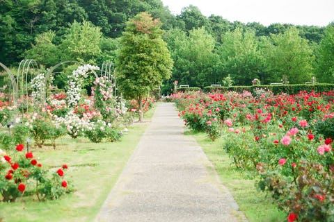 Garden party venues in London: The best event venues with gardens and courtyards