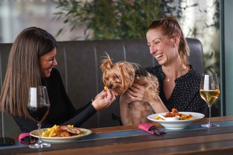 The most dog-friendly restaurants in London