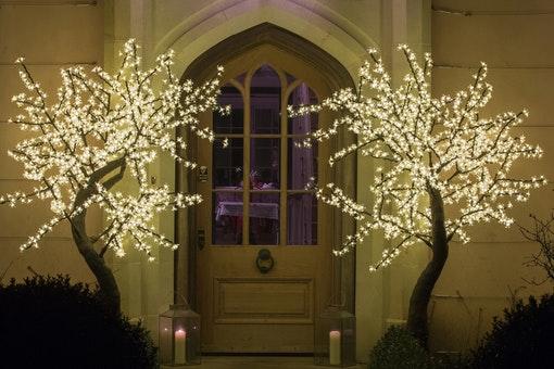 Twilight Trees Ltd